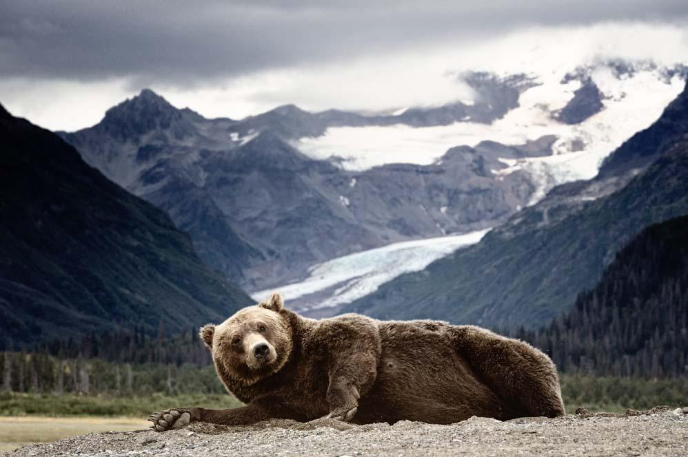 medve piac a láthatáron