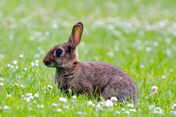 rabbit-1372928413BYn