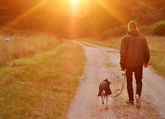 szalad a kutya – botladozik a gazdája?